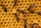 A Te Puke beekeeper pleaded guilty to six charges to theft. Photo / Thinkstock
