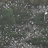The albatross colony. Photo / Jim Eagles