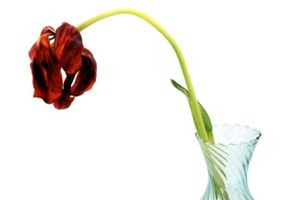 Viagra can have the same effect on a wilting bouquet. Photo / Thinkstock