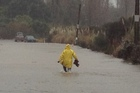 A man wades flood conditions on the Waih Beach Road off State Highway 2. Photo / Alan Gibson