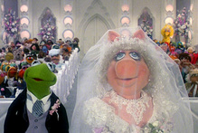 Gay marriage is out, but creature nuptials are OK. Photo / Supplied