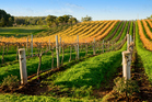Australia's Barossa Valley is well-known for its wine, but, how does it size up with the greats of New Zealand? Photo / Thinkstock
