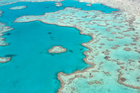Fish from Great Barrier Reef have had analysis done on dark legions of their skin and characteristics of melanoma have been found. Photo / Thinkstock