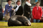 A very tired seal catches up on some sleep. Photo / Alan Gibson
