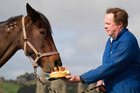Auckland horse trainer Kevin Smith feeds birthday cake garnish with carrots to trotter Perigo, who turns 15 today.  Photo / Richard Robinson
