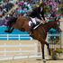 New Zealand's Mark Todd knocks a rail off during his Show Jumping in the Equestrian Eventing. Photo / Brett Phibbs.