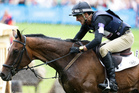 Mark Todd and Campino are a strong medal chance at the 2012 Olympics overnight. Photo / AP
