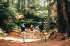 The Whakarewarewa Forest has trails for everyone from beginners to experienced mountain bikers. Photo / Supplied