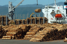 Log prices, along with aluminium, pulp and kiwifruit fell 1pc last month. Dairy mitigated the fall, up almost 1 per cent. It's the sixth straight month of commodity price falls. Photo / NZPA