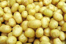 New Zealand has not been able to to send fresh potatoes to Australia since 1988. Photo / Ross Setford.