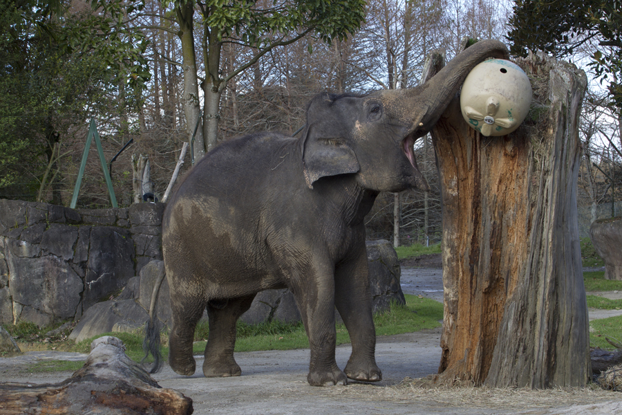Auckland Zoo has come a long way from the days of menageries and travelling circuses, with their focus now on conservation