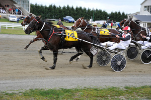 Punters rushed to the bar after bolter Motu Speedy Star (No 14) at 47-1 won the Kurow Cup at Oamaru yesterday. Photo / APN