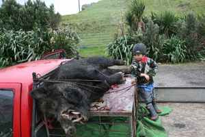 Shem Vallis is not overly impressed with his dad's big boar.  Photo / Geoff Thomas