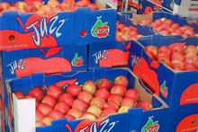 Jazz apples on their way to Australia. Photo / file