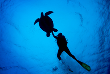 A green turtle comes along for a swim at Arutanga Passage off Aitutaki in the Cook Islands. Photo / Richard Robinson