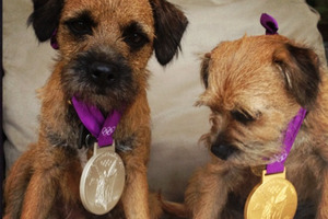 Rusty (left) and Maggie May (right) don Andy Murray's two Olympic medals. Photo / Twitter