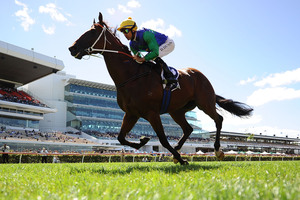 All Too Hard will step out at Rosehill today. Photo / Theo Karanikos