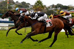 Auckland Cup winner Shez Sinsational (No 5) resumes for the season in the Foxbridge Plate on Saturday. Photo / Natalie Slade