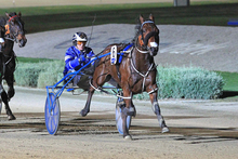 Semifinal winner Border Control will be the testing material for Franco Nelson at Melton on Sunday. Photo / Stuart McCormick