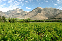 Vineyards in Chile are starting to churn out great sauvignons that may have Kiwi growers grappling for top spot in the world wine industry. Photo / Thinkstock