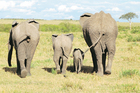 The wildlife of the Masai Mara has evolved over millions of years. Photo / Supplied