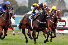 Fritzy Boy (yellow and black colours) has a great record on wet tracks and over 1200m. He looks a safe each-way bet for the Foxbridge Plate.Picture / APN
