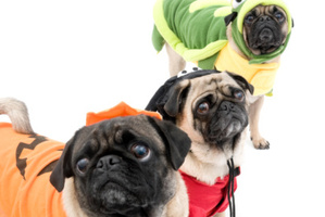 Our obsession with dogs has reached an all time high. Photo / Thinkstock