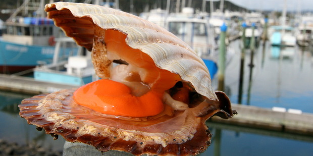 Whitianga Scallop Festival is the best place to get your fill of this much-loved shellfish. Photo / Supplied