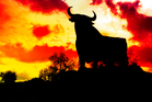 The bull is the national animal of Spain. Photo / Thinkstock