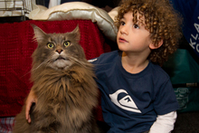 3-year-old Santaigo Falla hanging out with one of the largest cats in New Zealand. Photo / Sarah Ivey