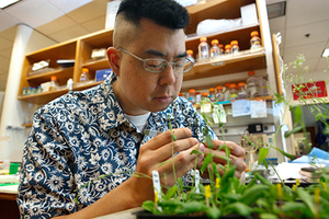 Simon Chan, shown in his UC Davis plant biology lab, led the discovery to how breed plants with genes from only one parent. Photo / Supplied
