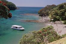Goat Island Marine Reserve had the cleanest marine water surveyed. Photo / Supplied