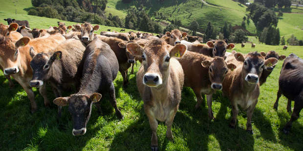 Allied Farmers is a rural services business. Photo / NZH