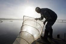 A whitebaiter checks his nets. Photo / File / Glenn Taylor