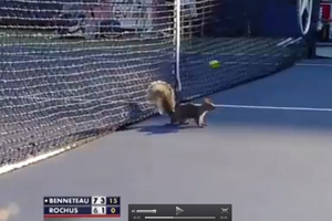 A U.S. Open match between Julien Benneteau and Olivier Rochus on Wednesday (NZT) was interrupted in the second set by a squirrel running onto the court. Photo / Youtube