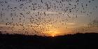 New Mexico: Bat-spotting at Carlsbad Caverns