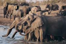 It's easy to get up close to the wildlife in Zimbabwe. Photo / Thinkstock