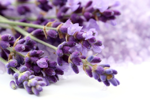 Lavender has many medicinal properties. It's believed the oil acts a painkiller while tea made from its leaves is said to soothe the stomach. Photo / Thinkstock