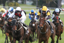 Indikator (left) and Marea Alta are chances in race 8 at Ellerslie today.  Photo / APN 