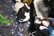 Eels captivate the attention of children and are a great tool for learning more about our waterways. Photo / Supplied