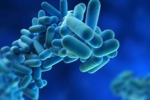 The bacteria. Photo / Thinkstock