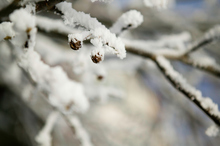 The frosts are not unusual for this time of year. Photo / Thinkstock 