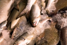 Tauranga fisher fined $22,500 for illegally obtaining a large quantity of fish. Photo / ThinkStock 