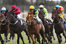 Buckland Boy (green with yellow cap above) likes the Ruakaka track and will be an each-way hope tomorrow. Photo /  Northern Advocate