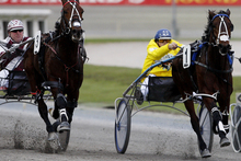 Major Mark (right) is a top chance at Oamaru on Sunday.Picture / Christine Cornege