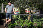 Justin Newcombe fence will hopefully keep the four-legged critters from trampling over the greens. Photo / Natalie Slade