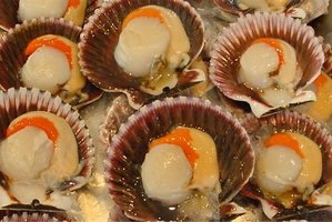 A Northland man has been caught with an illegal haul of mostly undersized scallops.