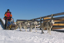 Quiet Running's sled rides, whizzing across snowy terrain behind teams of Siberian huskies, are a real 'Call of the Wild', Jack London experience. Photo / Supplied