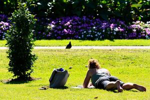 Albert Park: a painter's paradise. Photo / Martin Sykes