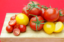 Tomatoes are pretty easy to grow, which is probably why they are so popular. Photo / Babiche Martens